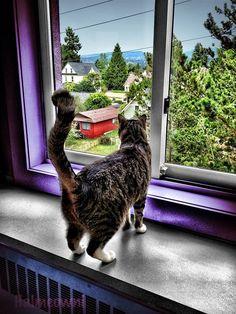 Katze, Fenster, Suchen, Häuslich, Home, Haus, Drinnen