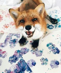 This is Juniper the Fox who just happens to be an amazing artist.