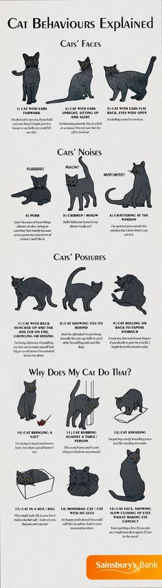 Cats Toys Ideas - Infographic about Cat Behaviours Explained - Most affectionate cat breeds ideas and inspirations - Ideal toys for small cats Animals And Pets, Funny Animals, Cute Animals, Baby Animals, Cute Cats, Funny Cats, Adorable Kittens, Cat Body, Cat Info