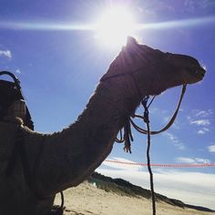 sunny today with a chance of camel   Camel Rides from 10am - 3:30pm Eastern Beach Lakes Entrance VIC  #beachweather #holidays #australiancamels #camelrides #camels #lakesentrancecamelrides #lakesentrance #easternbeach by australiancamels http://ift.tt/1JtS0vo