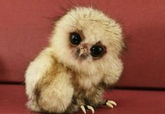 Baby Animals So Ugly They're Cute – 30 Pics...they are really cute!