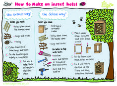 How to build a winter home for pollinating insects | Garden | Life ...