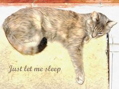 Just Let Me Sleep Canvas Print / Canvas Art by Dorothy Berry-Lound Canvas Art, Canvas Prints, Framed Prints, Berry, Canvas Material, Cute Cats, Cat Lovers, My Arts, Sleep