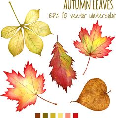 Various autumn leaves vector set material 04 - Dawn Idea Autum Leaves, Autumn Trees, Watercolor Leaves, Watercolor Paintings, Fall Leaves Drawing, Autumn Illustration, Leaves Vector, Autumn Art, Leaf Art