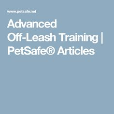 Advanced Off-Leash Training | PetSafe® Articles