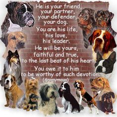 Be worthy of your dog's devotion, they may not be with you long