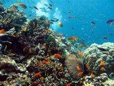 Coral garden great barrier reef