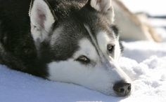 Pets Found Dead With Taped Mouths in Calgary, Ca. ...R*E*W*A*R*D for information leading to arrest!!!!!