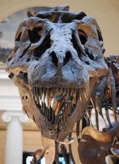 In the nineteen century, the famous Victorian anatomist Richard Owen diagnosed Dinosauria using three taxa: Megalosaurus, Iguanodon and Hylaeosaurus, on the basis of three main features: large size…
