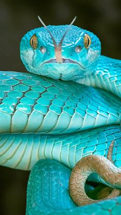 Pretty Snakes, Cool Snakes, Colorful Snakes, Beautiful Snakes, Les Reptiles, Cute Reptiles, Reptiles And Amphibians, Rare Animals, Cute Baby Animals