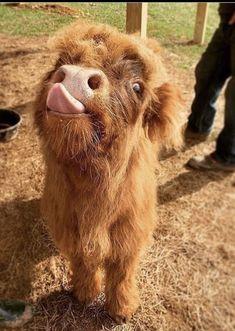 Baby Farm Animals, Cute Wild Animals, Pretty Animals, Baby Cows, Baby Animals Pictures, Super Cute Animals, Cute Little Animals, Cute Animal Pictures, Cute Funny Animals