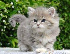 Fuzzy baby2