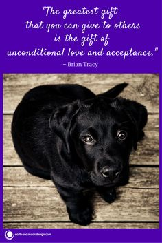 Unconditional love can be taught to us by pets.