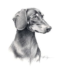 """See our website for more info on """"Dachshund dogs"""". It is an exceptional place to learn more. Dachshund Drawing, Dachshund Art, Daschund, Pencil Art Drawings, Animal Drawings, Drawing Animals, Dachshund Zeichnung, Scottish Terrier, Pictures To Draw"""