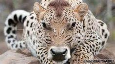 animal mashups -