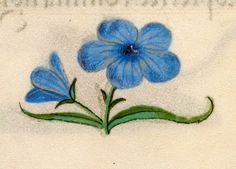 Libro d'Ore di Giovanna di Castiglia (1486-1506, British Library) blue bloom; gentian; ore gold