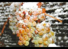 Ice wine...Hillebrand Winery (Ontario).  Ice wine grapes grow outside in freezing temps until harvested and pressed that same day, they are not grapes frozen in a freezer, got that California?