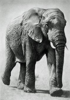 The Tusk Monster by ~CubistPanther on deviantART #AnimalArt #Elephant
