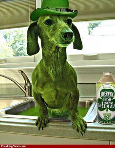 Green Dachshund