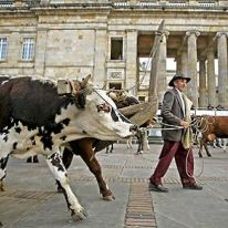 just taking the herd for a stroll South America, Past, Beautiful Places, Retro, World, City, Granada, Animals, Photos