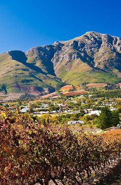 Vines 101: A guide to South African Wine.  http://www.butterfield.com/blog/2013/01/15/vines-101-south-africa-wine/  #travel #South #Africa #wine #guide #holiday #destination #trip #myBNR
