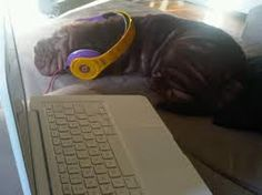 YEP! that is a dog wearing beats, lol it reminds me of Zella cause Bella has a dog called Kingston and this dog is called Kingston! And Daya was in the Beats commercial! xox