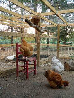 Diy chicken coop plans pdf and chicken coop ideas for sale. Backyard Chicken Coop Plans, Chicken Coop Run, Chicken Coup, Building A Chicken Coop, Chickens Backyard, Chicken Tractors, Inside Chicken Coop, Chicken Coop Decor, Chicken Coop Pallets
