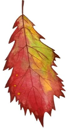 New Maple Tree Craft Autumn Leaves Ideas Autumn Painting, Autumn Art, Autumn Leaves, Watercolor Leaves, Watercolor Cards, Watercolor Paintings, Painted Leaves, Painted Rocks, Fall Arts And Crafts