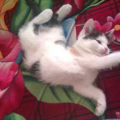 Kočička Clea