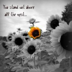 Advice from a Sunflower 🌻 Sunflower Quotes, Sunflower Pictures, Sunflower Art, Happy Flowers, Beautiful Flowers, Sun Flowers, Color Splash, Color Pop, Colour
