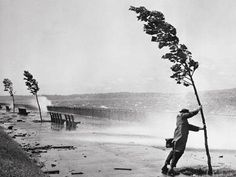 Photographic Print: Man Holding onto Tree during Hurricane Carol by Stanley Hall : Stanley Hall, Old Photos, Vintage Photos, Blowin' In The Wind, Windy Day, Windy Weather, Foto Art, Pics Art, Black And White