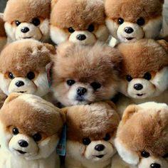 Where Can I Buy Boo The Dog Stuffed Animal