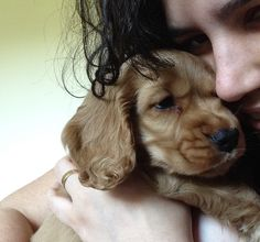 Lutero #cocker #dog #pet #petlovers #filhotes