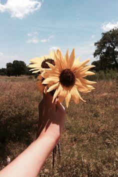 Sunflower ♡ Pinterest ⇒@KristelMendoza♡
