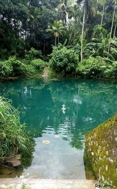 Tips for Building Ponds in Your Backyard - My Backyard ideas Kerala Travel, Kerala Tourism, India Travel, Kerala India, South India, India India, Incredible India, Amazing Nature, Nature Pictures