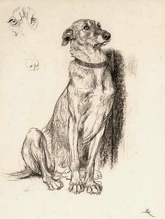 Animal Sketches, Animal Drawings, Art Sketches, Art And Illustration, Art Studies, Dog Portraits, Animal Paintings, Dog Art, Oeuvre D'art