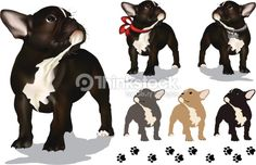 Cute french bulldog puppy. All vector illustration using mesh gradient, and flat color. Includes cream, black, and gray/blue, non-mesh puppies. And the mesh gradient pups include one with a red...