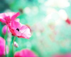 pink flower photography fine art nature by mylittlepixels