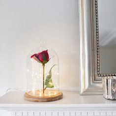 Create a magical enchanted rose bell jar with our glass dome and sparkly fairy lights!