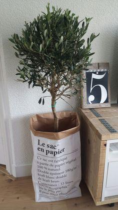 Olijfboom in le sac en papier