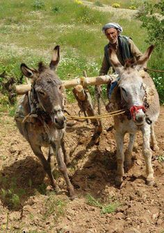 This is a beautiful site of the life in village! Kurdistan, Reign Characters, Naher Osten, Village Photography, Livestock Farming, The Kurds, Paradise On Earth, Beautiful Sites, We Are The World