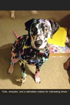This dog (: