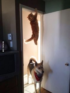 Hey, have you see the cat?