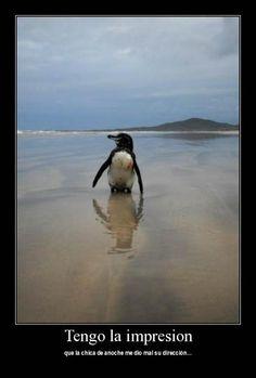 Fotos de Animales para Facebook. me dio mal su direccion. Estas imagenes sirven para ponerla en tu muro de facebook, Twitter, Google plus