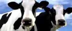 April 30, 2012: Mad Cow Case & Choosing Better Beef
