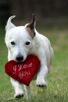 dog saying i love you