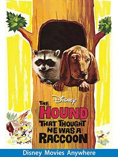 The Hound That Thought He Was a Raccoon - A hound raised by racoons has no idea he's a different species until his human master tries to train him to hunt his best friends. Every Disney Movie, Disney Movie Posters, Disney Movies To Watch, Disney Films, Walt Disney, Hound Puppies, Bassett Hound, Old Movies, Classic Movies