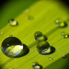 Nature photography green water droplets New Ideas Water Art, Nature Water, Art Nature, Dew Drops, Rain Drops, Photographie Macro Nature, Drip Drop, Fotografia Macro, Water Droplets