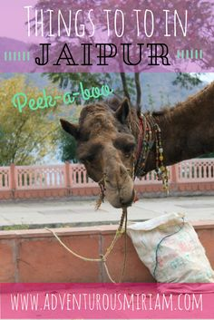 INDIA - Things to do in Jaipur #india #jaipur #travel