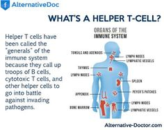 """Helper T cells have been called the """"generals"""" of the immune system because they…"""